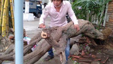 Giá gốc cây hoa giấy cổ thụ lâu năm, bonsai đẹp nhất? Mua ở đâu?