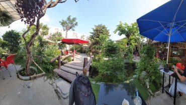 Cung cấp ăn quả cảnh, cây bóng mát giá sỉ tại Đà Nẵng