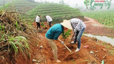 10 Cây ăn quả trồng trên đất đồi dốc hiệu quả kinh tế cao 2021