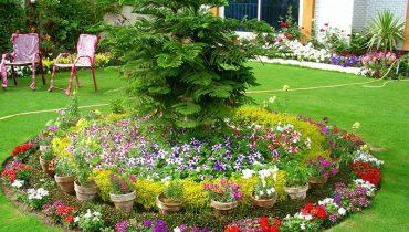 50 Loại Cây hoa đẹp trồng trước sân nhà tài lộc, sung túc, ấm no, hp