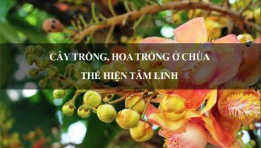 11 Cây trồng, hoa trồng ở chùa thể hiện Tâm Linh