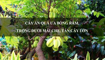 10 Cây ăn quả ưa bóng râm, trồng dưới mái che, tán cây lớn