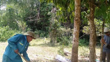 Giá bán cây bòn bon loại lớn, bóng mát, trồng cây công trình 2021
