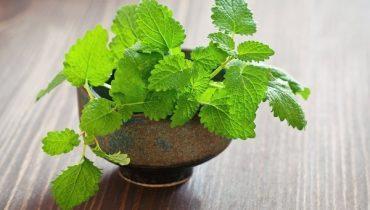 17 Cây trồng trong nhà Vệ sinh để khử mùi,lọc khí tốt nhất