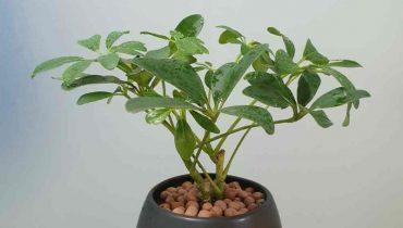 36 Cây trồng trong nhà lọc khí độc, đẹp, tốt cho sức khỏe