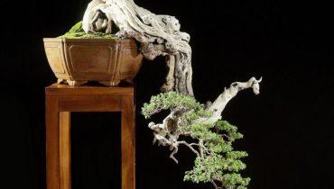 1000+ Mẫu cây bonsai đẹp nhất Việt Nam, thế giới 2021 từ a-z